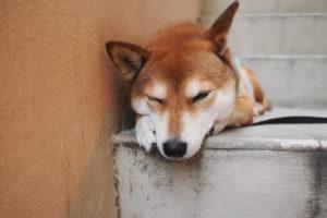【宿泊体験談】石垣島の格安ゲストハウスえみっくすがコスパ良すぎた
